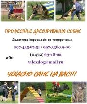Лучшая Профессиональная Дрессировка собак в Черкассах!