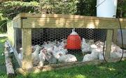 Продам мясо бройлера вырощенное на натуральных кормах!!!