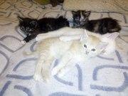 Подарю  красавчиков котят 1, 5 месяца