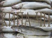 Предлагаем рыбу речную свежемороженную