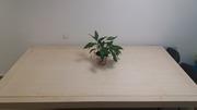 Большой стол из лиственницы
