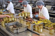 Рабочие на Упаковку Рыбных Консервов
